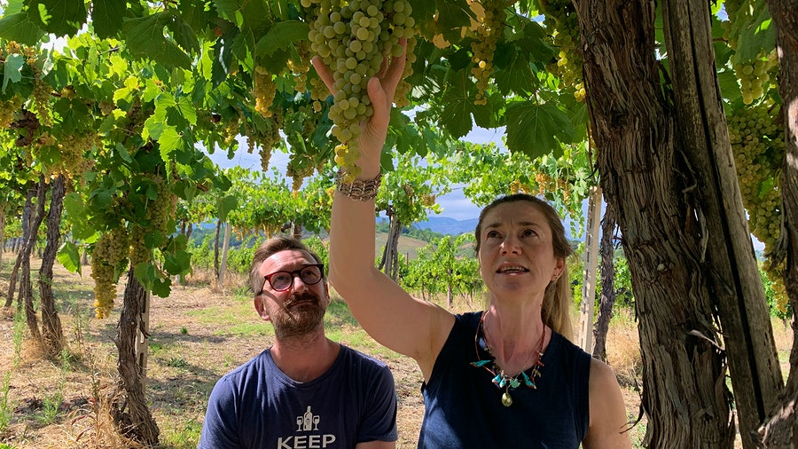 Siblings Cristiana Tiberio and Antonio Tiberio inspect one of their old pergola-trained Trebbiano Abruzzese vines.