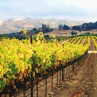 Ameplos Cellars' devotes most of its Sta. Rita Hills estate to Pinot Noir, resulting in noteworthy red wines.10 Central Coast Charmers Up to 92 Points