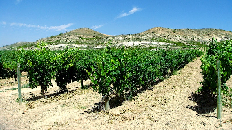 7 Charming Spanish Reds for $30 or Less