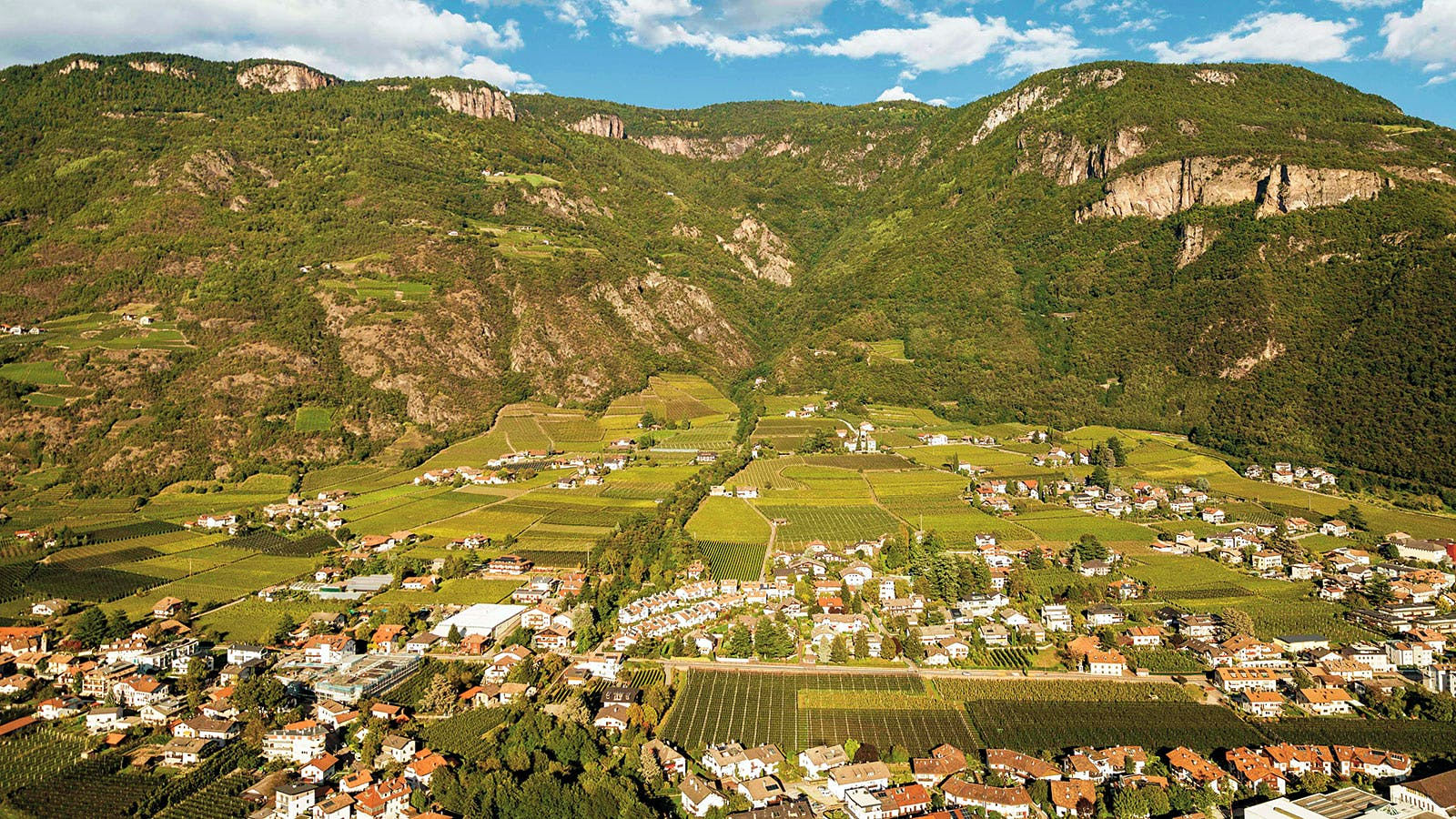 7 Refreshing Pinot Grigios from Northeast Italy