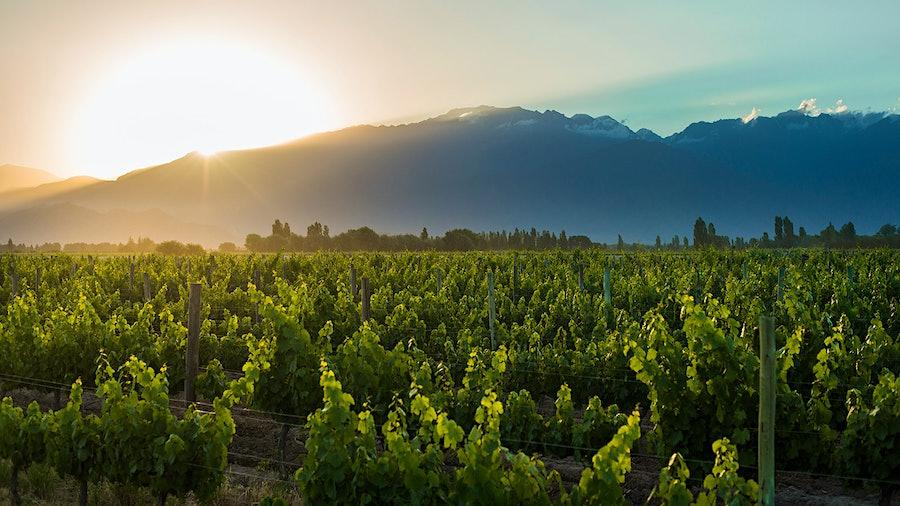 Vineyards near mountains
