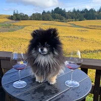 Portrait of Blue, a mixed breed rescue and mascot of Washington's Roaming Dog Wines, running in a vineyardGallery of Readers' Dogs: Check Out 1,500+ Photos!