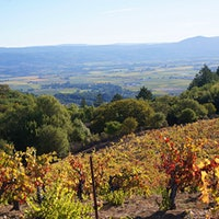 Grapes from Brandlin Vineyard are used for Peter Franus' acclaimed Napa reds.97-Point Hermitage, Classic Napa Cabernets