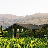 Clos du Val's 120-acre Hirondelle Vineyard is planted to nine clones of Cabernet Sauvignon.Clos du Val Gets Back on Course