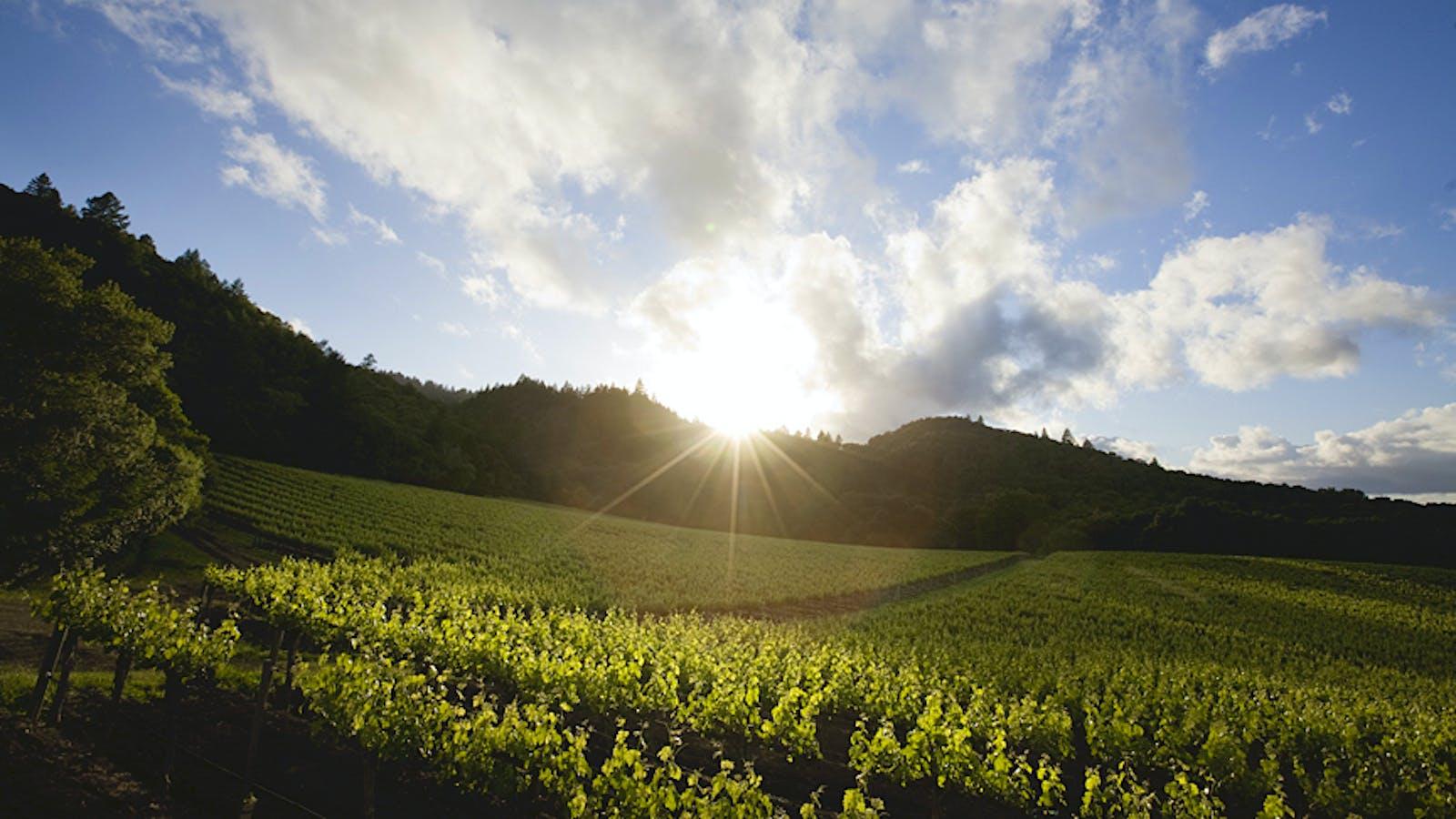 Vine Hill Ranch: One of Napa Cabernet's Best-Kept Secrets