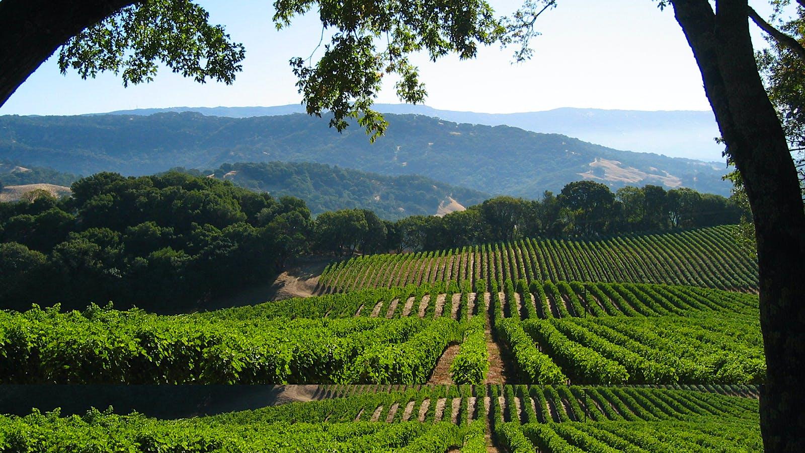 10 Fresh Napa Valley Sauvignon Blancs at 90+ Points