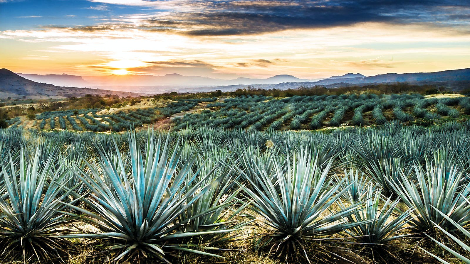 The Tequila Trail