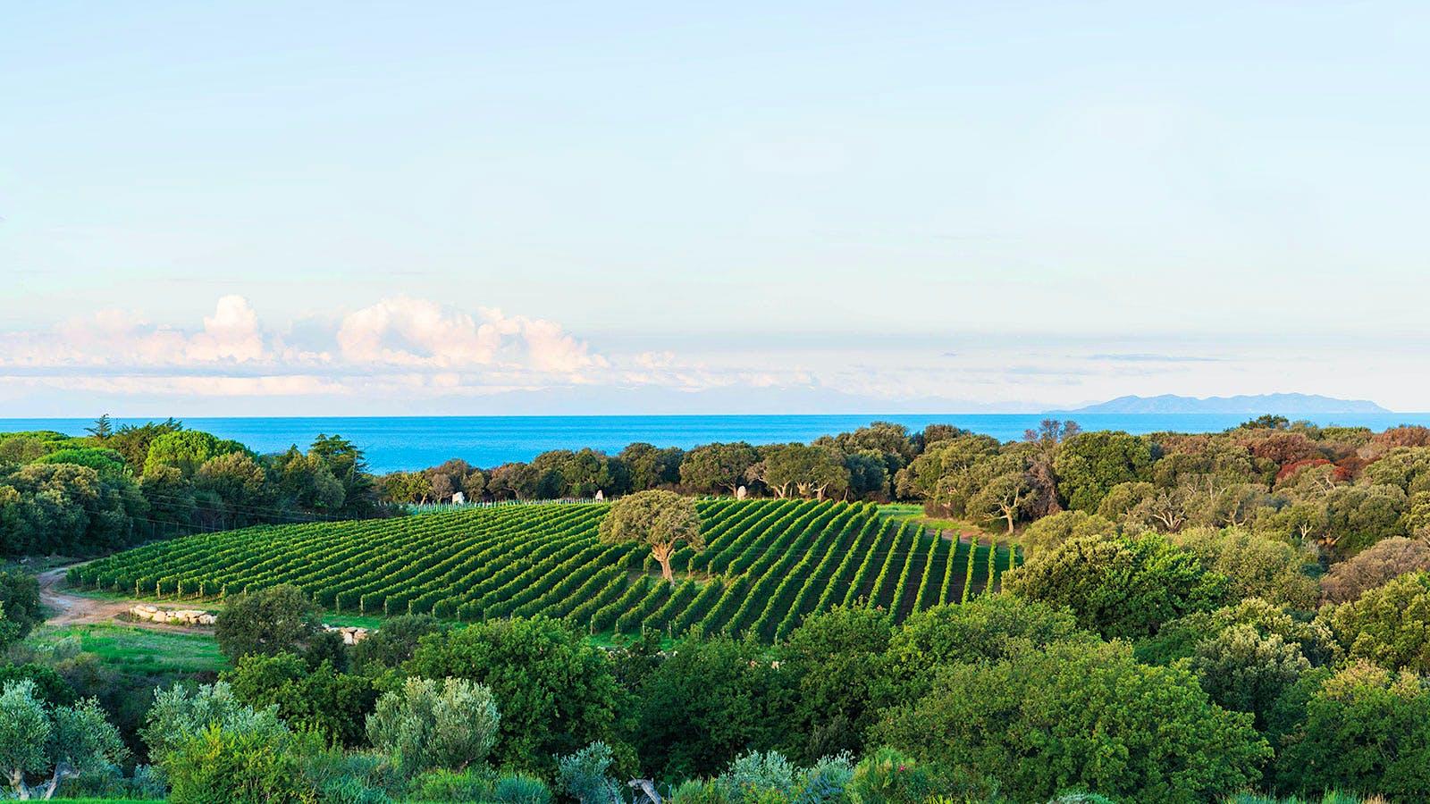 Tuscany's Napa