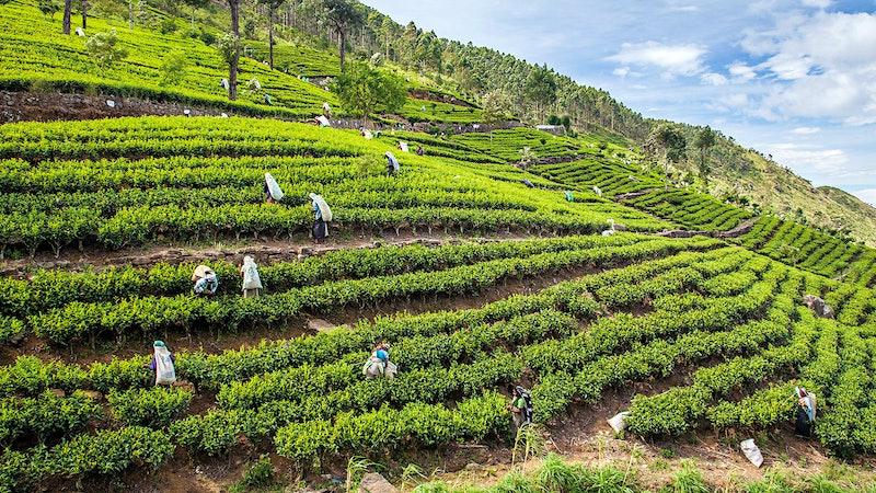 Spectacular Ceylon