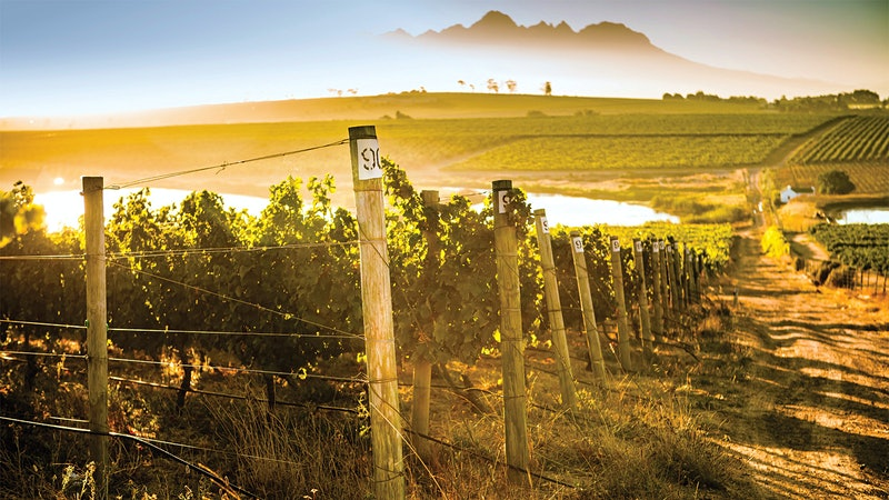 South Africa's Mulderbosch Sold