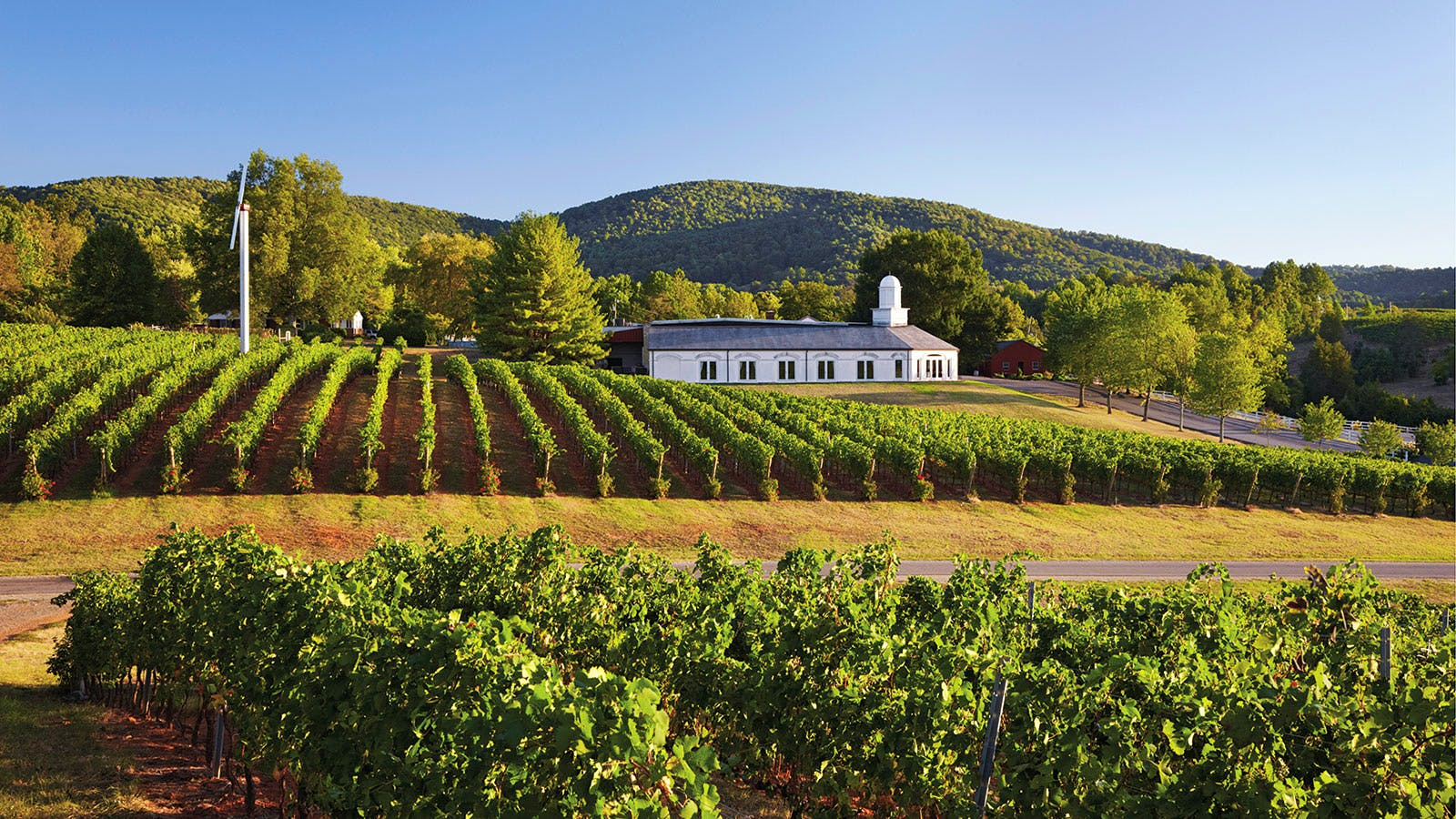 Virginia's Wine Dominion