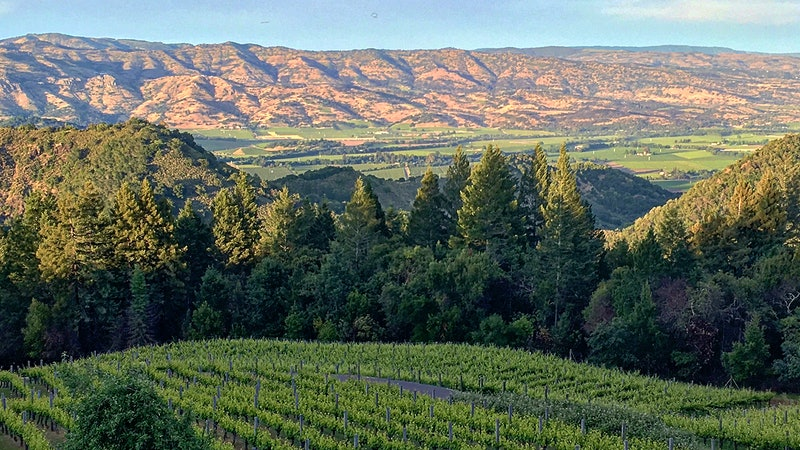 按字母顺序排列指南加州Rhônes