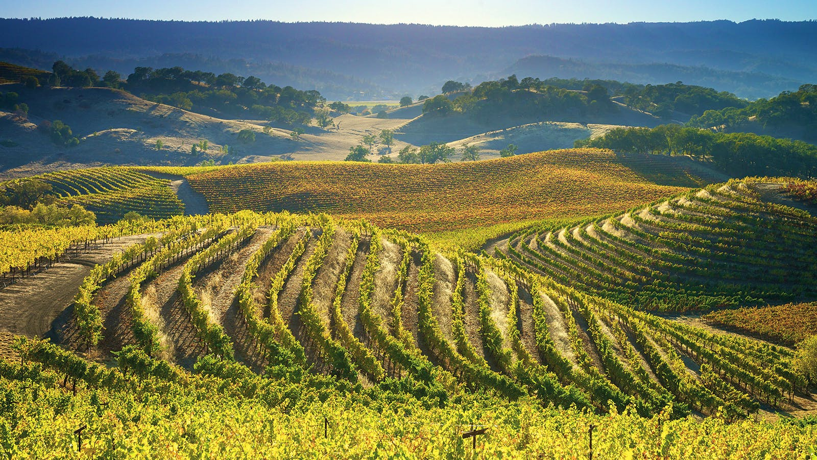 A Golden Age for Sauvignon Blanc