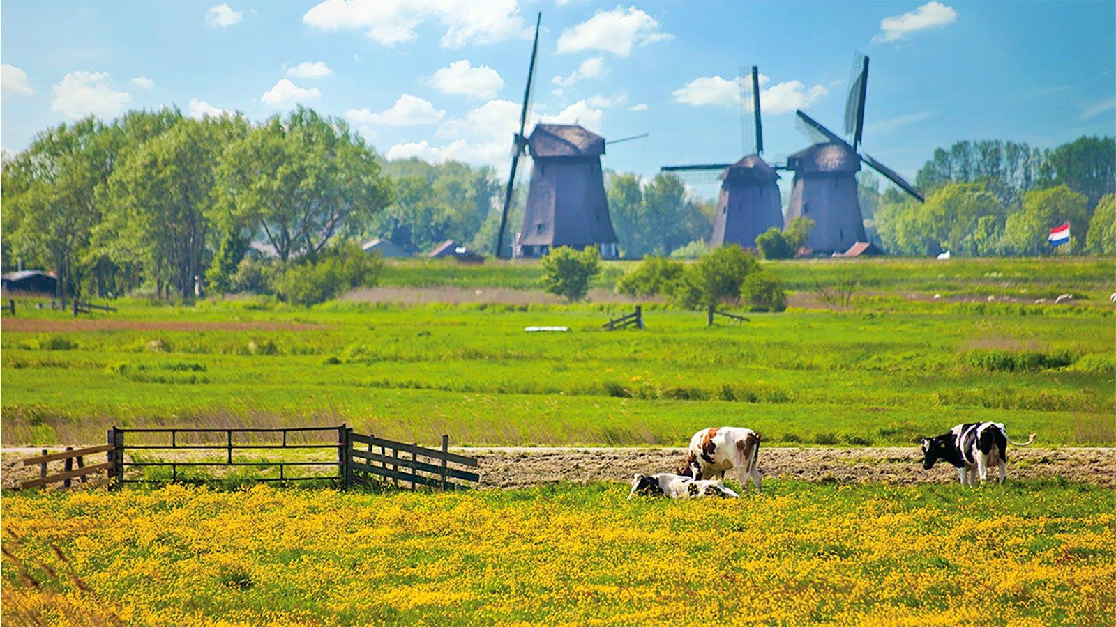 Mighty Gouda, Pride of Holland