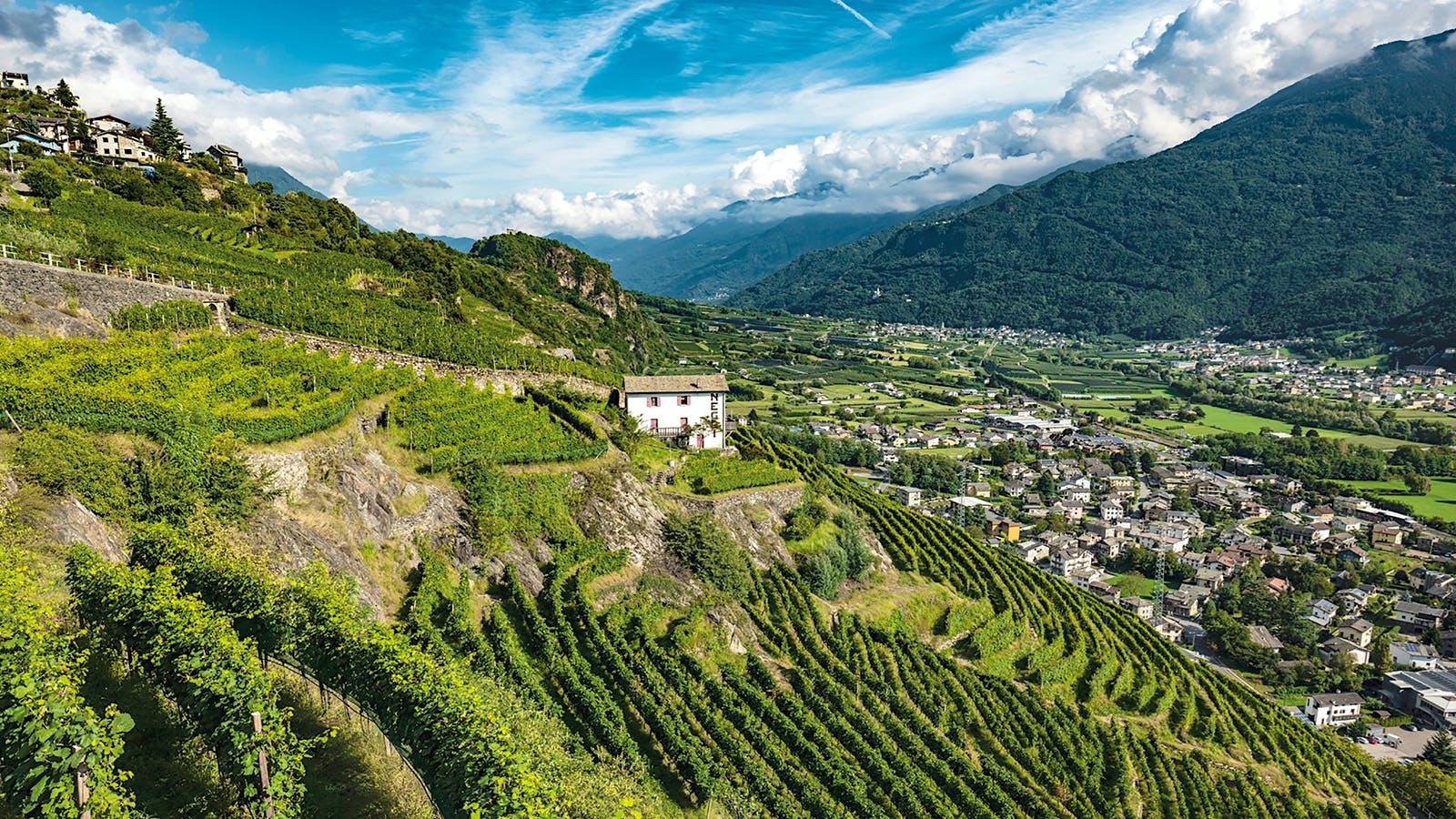 Valtellina's Distinctive Nebbiolos
