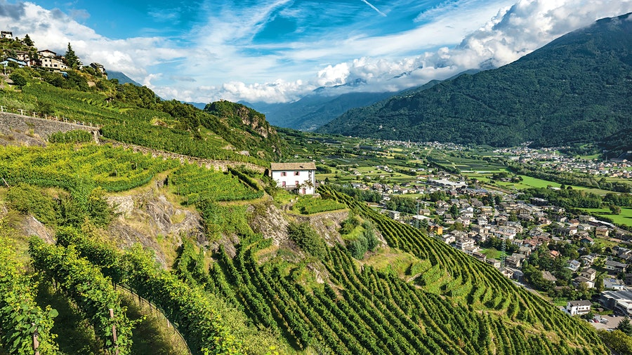 The mountainside vineyards of Nino Negri