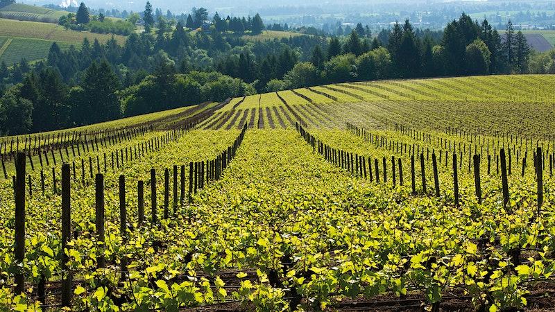 Alphabetical Guide to U.S. Sparkling Wines