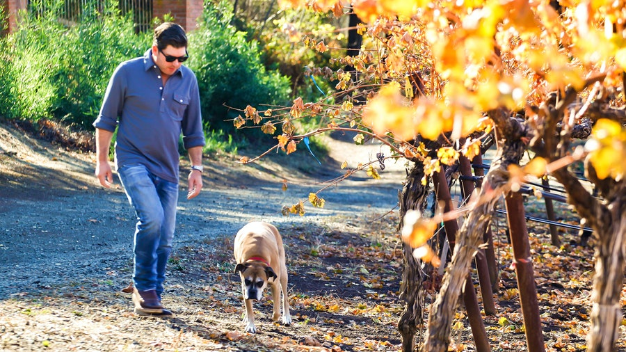 Vintner Dave Phinney enjoys vineyard walks with his Boxer Coco.