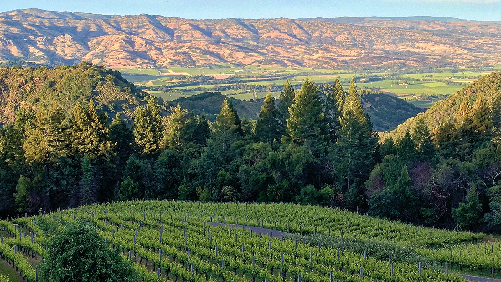 Alphabetical Guide to California Rhône-Style Wines