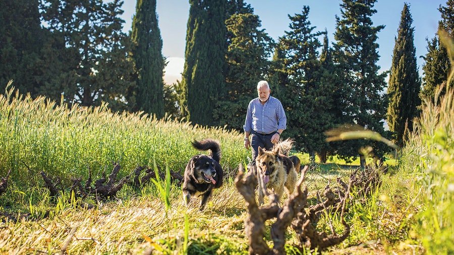 Ken Forrester's outstanding 2019 Chenin Blanc FMC is the result of painstaking grape selection and blending from a sunny but cool vineyard site.