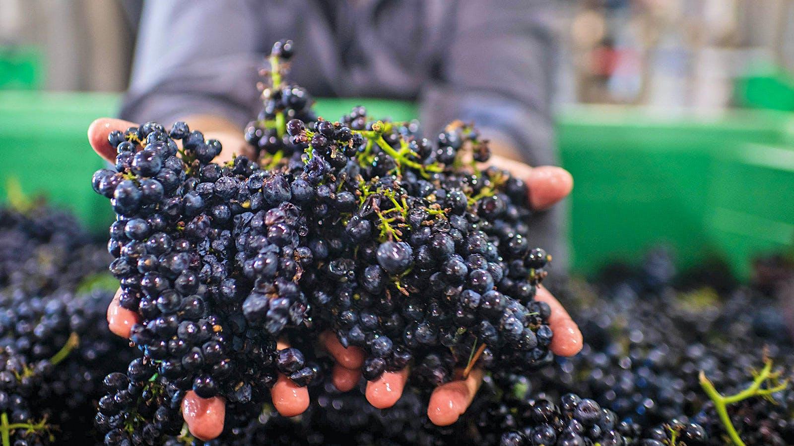 Alphabetical Guide to California Pinot Noir