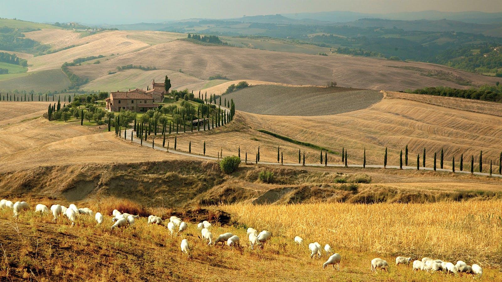 Pecorino: A Tuscan Gastronomic Icon